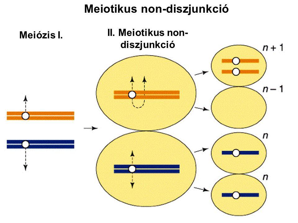 Meiotikus non-diszjunkció II. Meiotikus non-diszjunkció