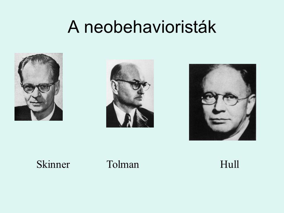 A neobehavioristák Skinner Tolman Hull