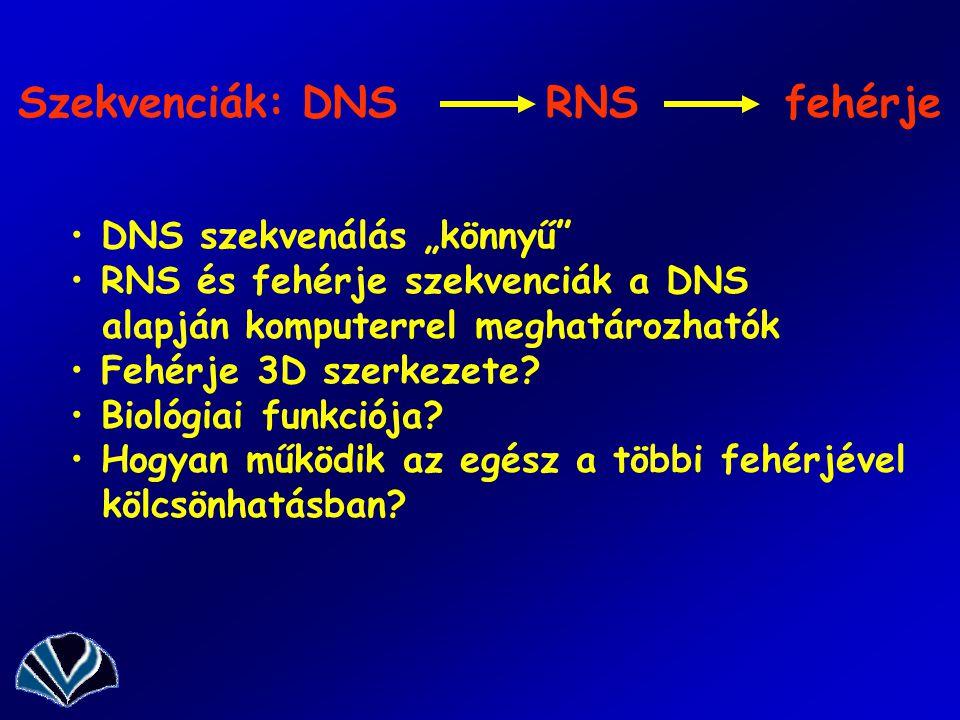 Szekvenciák: DNS RNS fehérje
