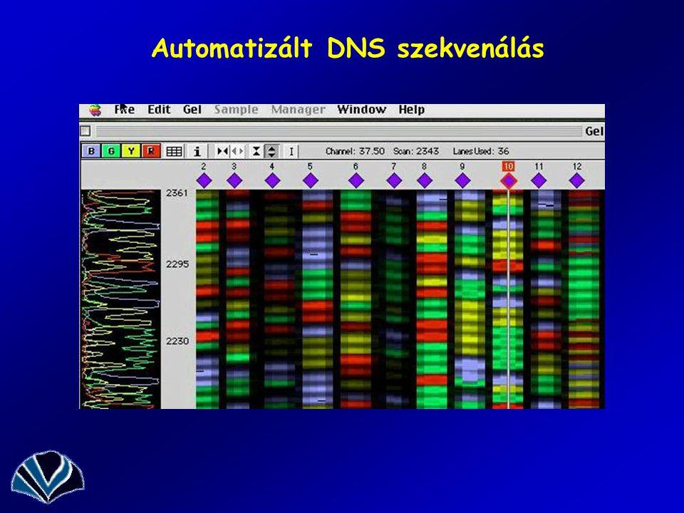Automatizált DNS szekvenálás