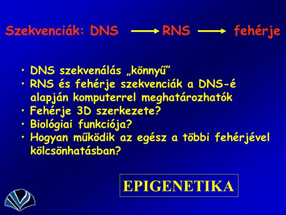 """EPIGENETIKA Szekvenciák: DNS RNS fehérje DNS szekvenálás """"könnyű"""