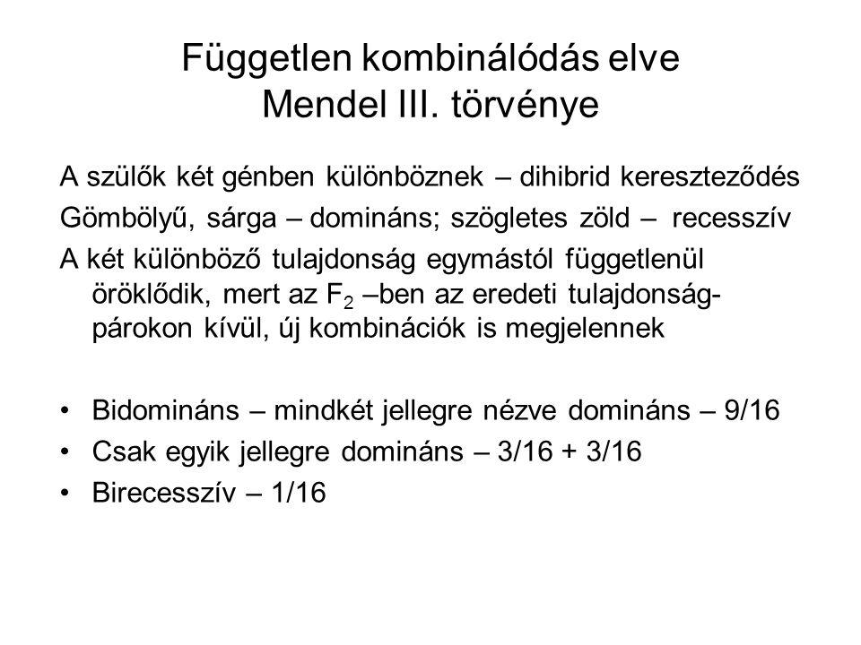Független kombinálódás elve Mendel III. törvénye