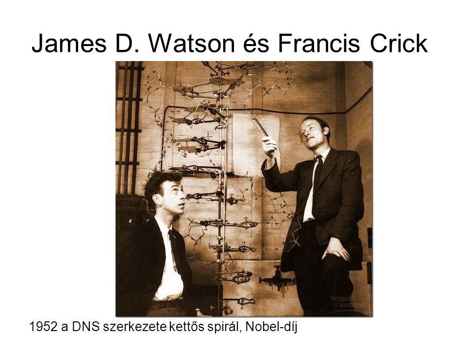 James D. Watson és Francis Crick