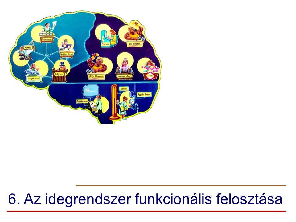 6. Az idegrendszer funkcionális felosztása