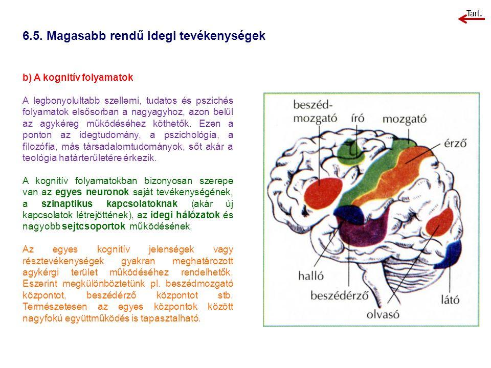 6.5. Magasabb rendű idegi tevékenységek
