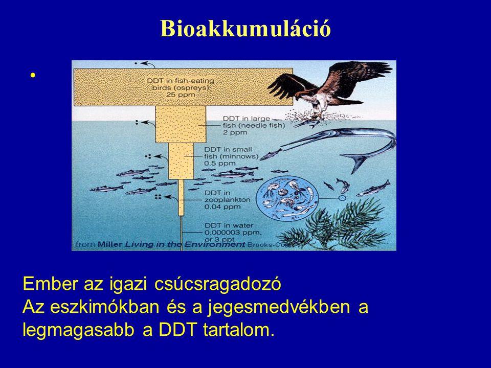 Bioakkumuláció Ember az igazi csúcsragadozó