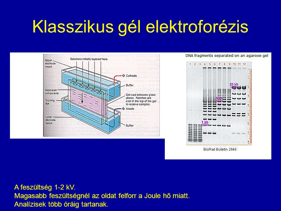 Klasszikus gél elektroforézis