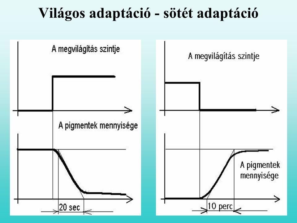 Világos adaptáció - sötét adaptáció