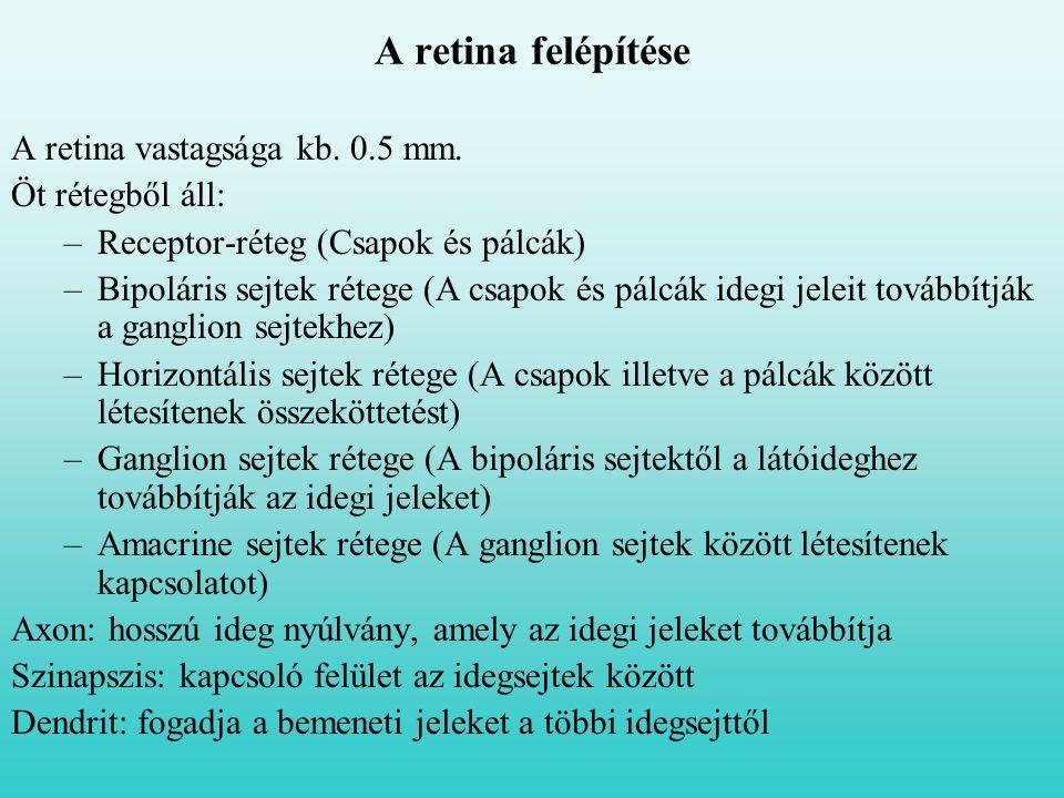 A retina felépítése A retina vastagsága kb. 0.5 mm. Öt rétegből áll:
