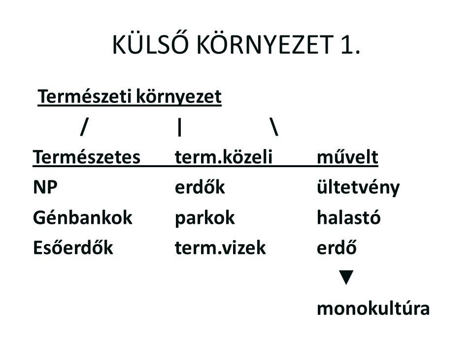 KÜLSŐ KÖRNYEZET 1.