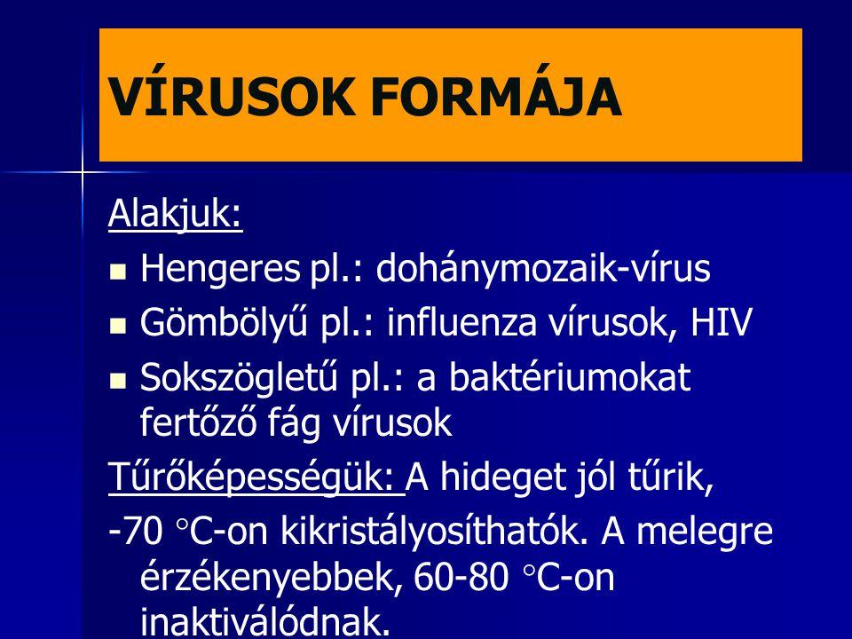 VÍRUSOK FORMÁJA Alakjuk: Hengeres pl.: dohánymozaik-vírus