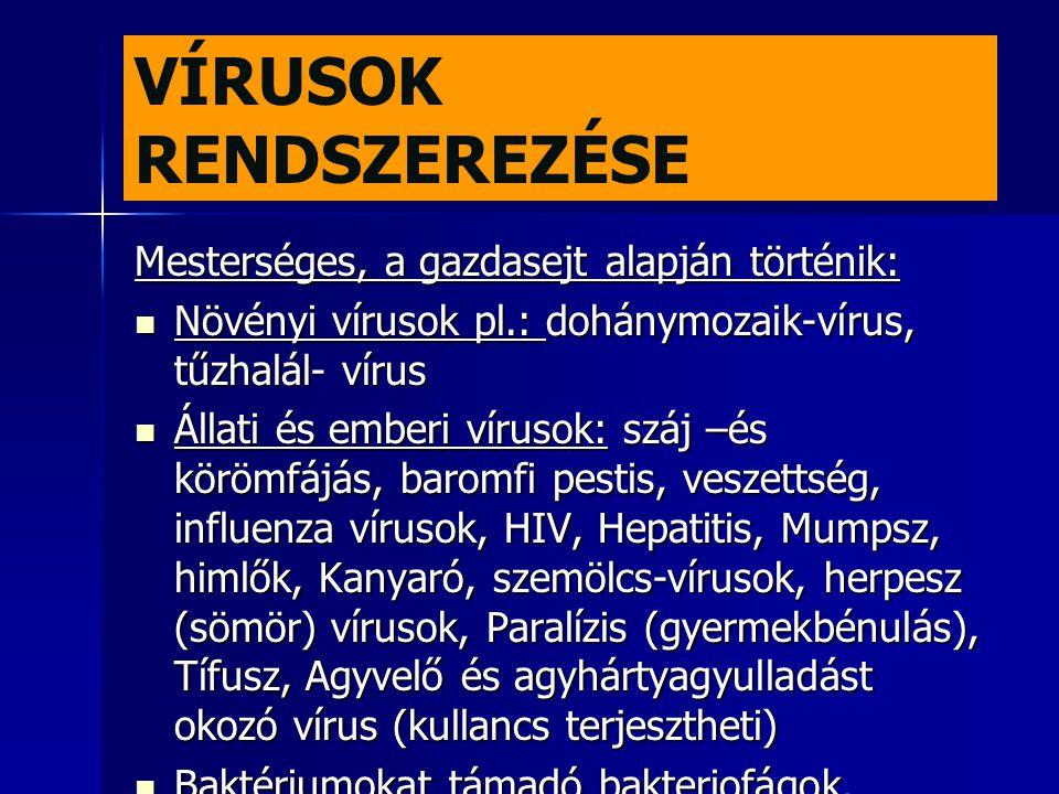 VÍRUSOK RENDSZEREZÉSE