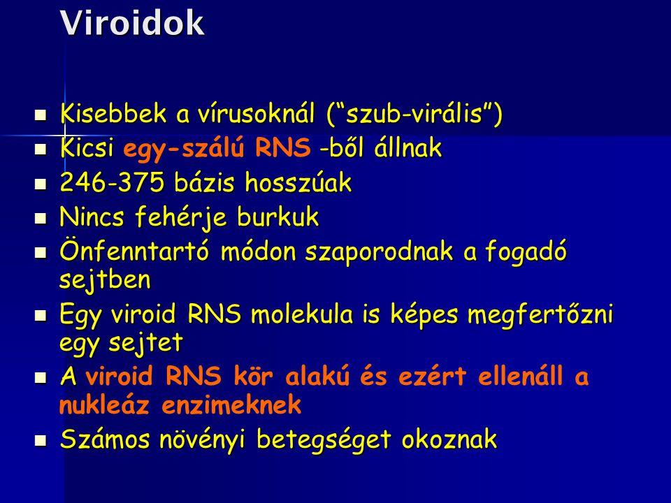 Viroidok Kisebbek a vírusoknál ( szub-virális )