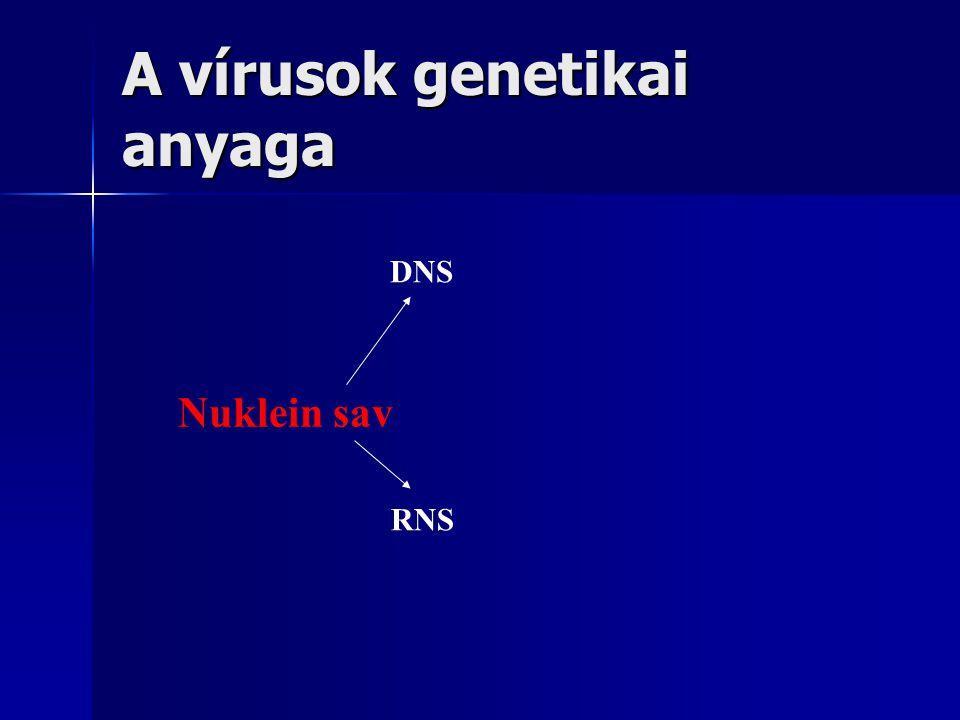 A vírusok genetikai anyaga
