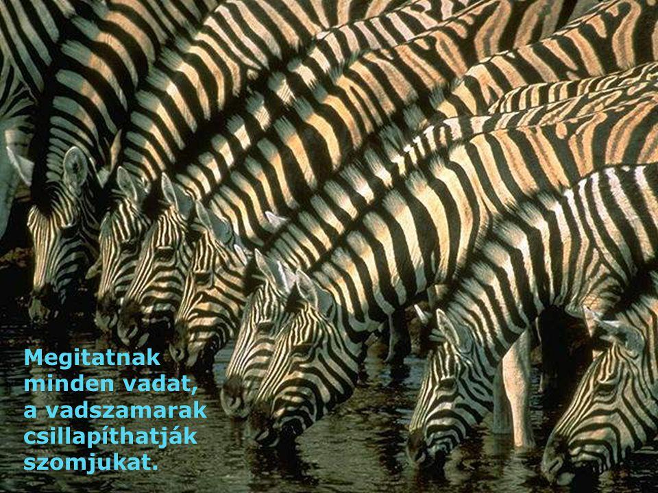 Megitatnak minden vadat, a vadszamarak csillapíthatják szomjukat.
