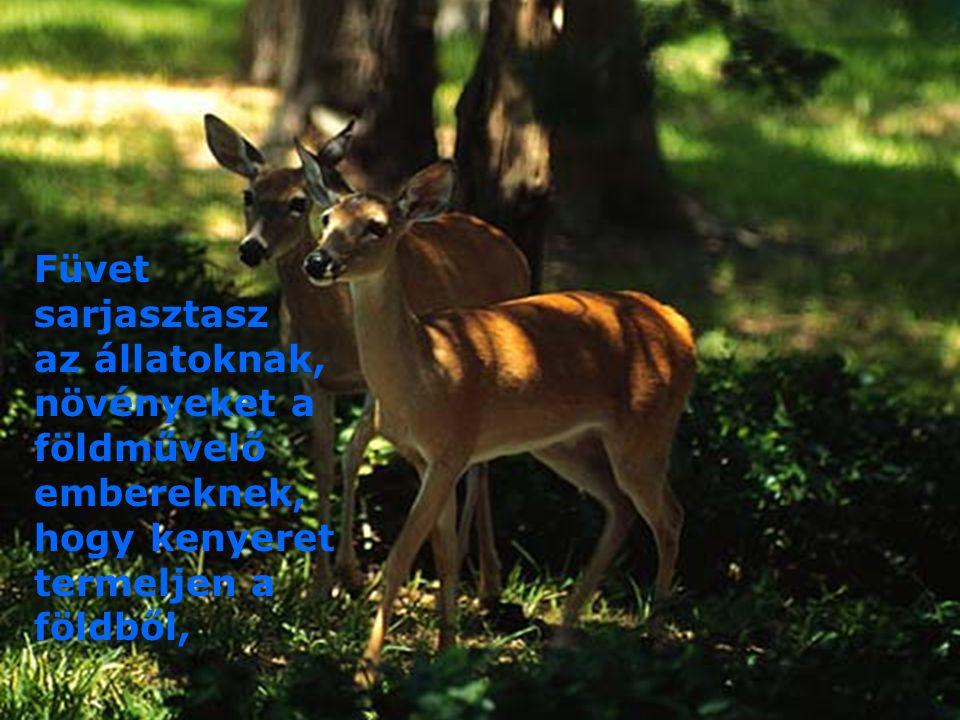 Füvet sarjasztasz az állatoknak, növényeket a földművelő embereknek, hogy kenyeret termeljen a földből,