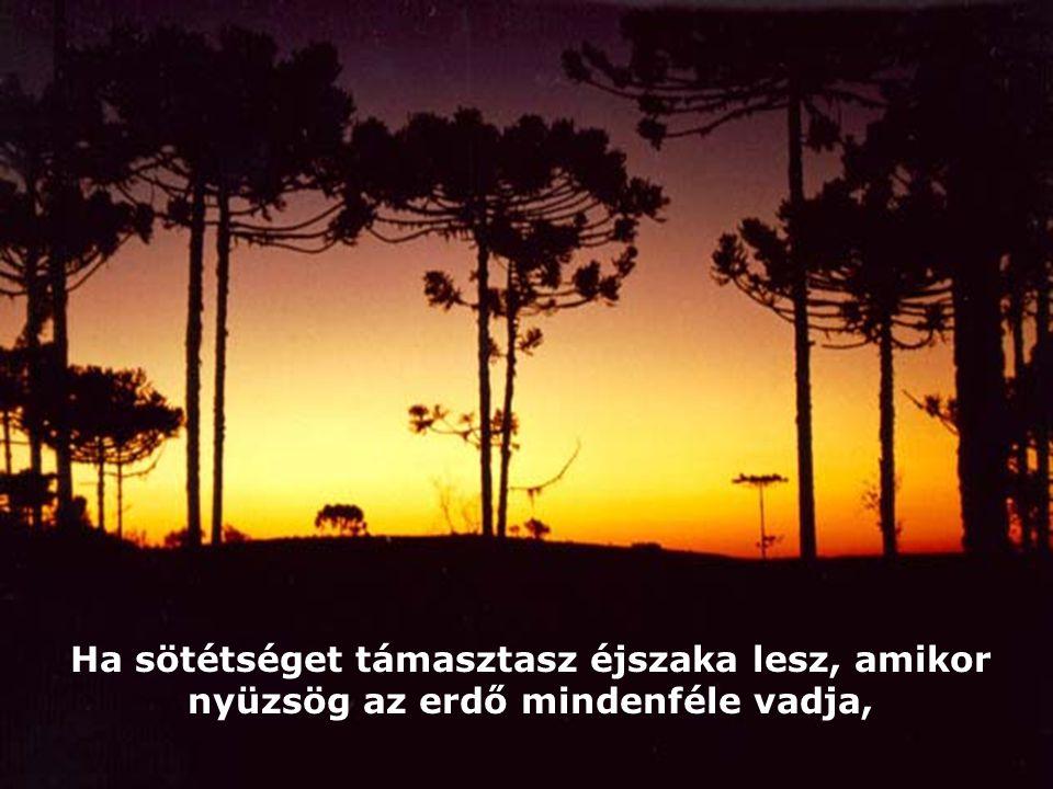 Ha sötétséget támasztasz éjszaka lesz, amikor nyüzsög az erdő mindenféle vadja,