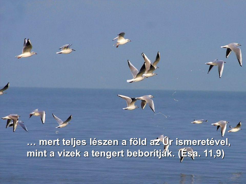 … mert teljes lészen a föld az Úr ismeretével, mint a vizek a tengert beborítják. (Ésa. 11,9)
