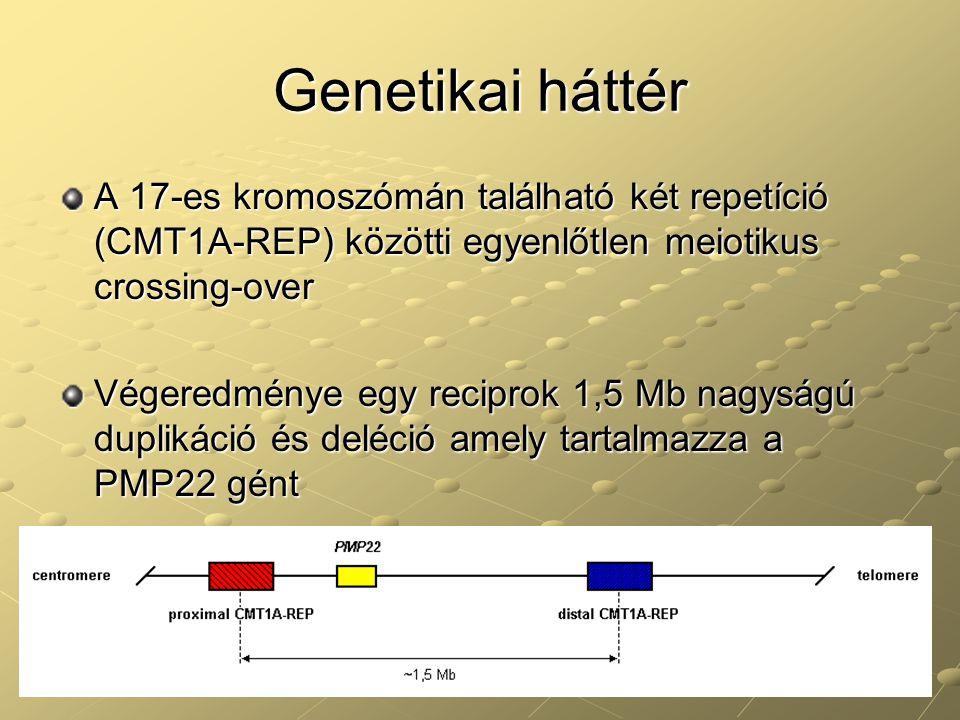 Genetikai háttér A 17-es kromoszómán található két repetíció (CMT1A-REP) közötti egyenlőtlen meiotikus crossing-over.