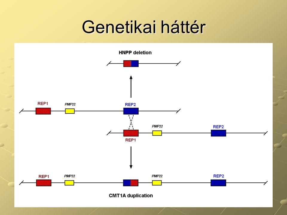 Genetikai háttér