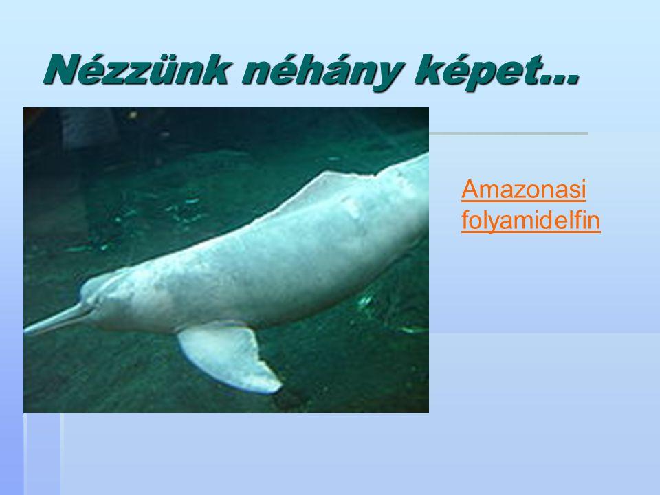 Nézzünk néhány képet... Amazonasi folyamidelfin