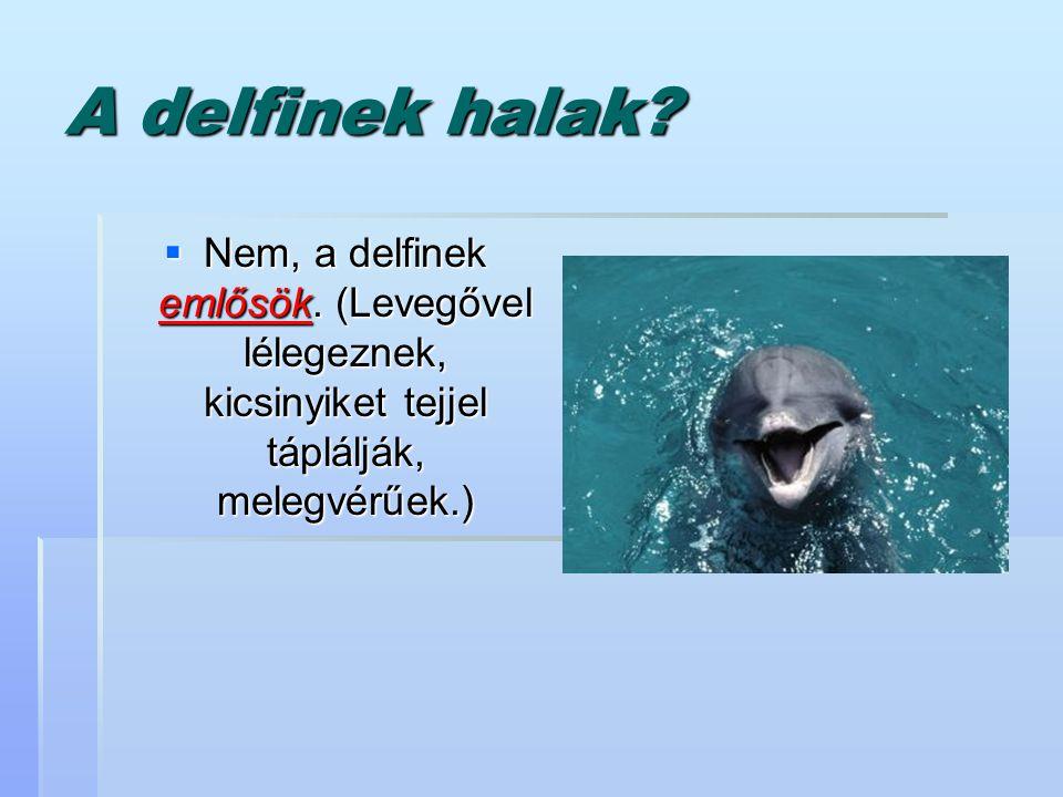 A delfinek halak. Nem, a delfinek emlősök.
