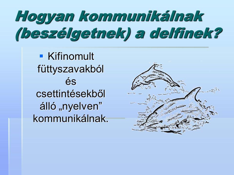 Hogyan kommunikálnak (beszélgetnek) a delfinek