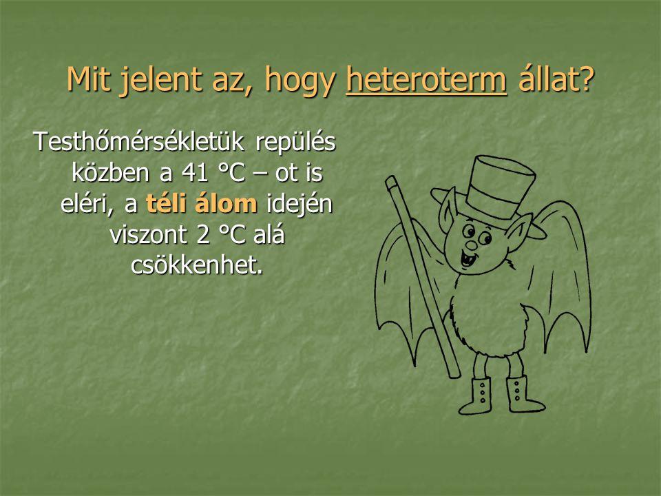 Mit jelent az, hogy heteroterm állat