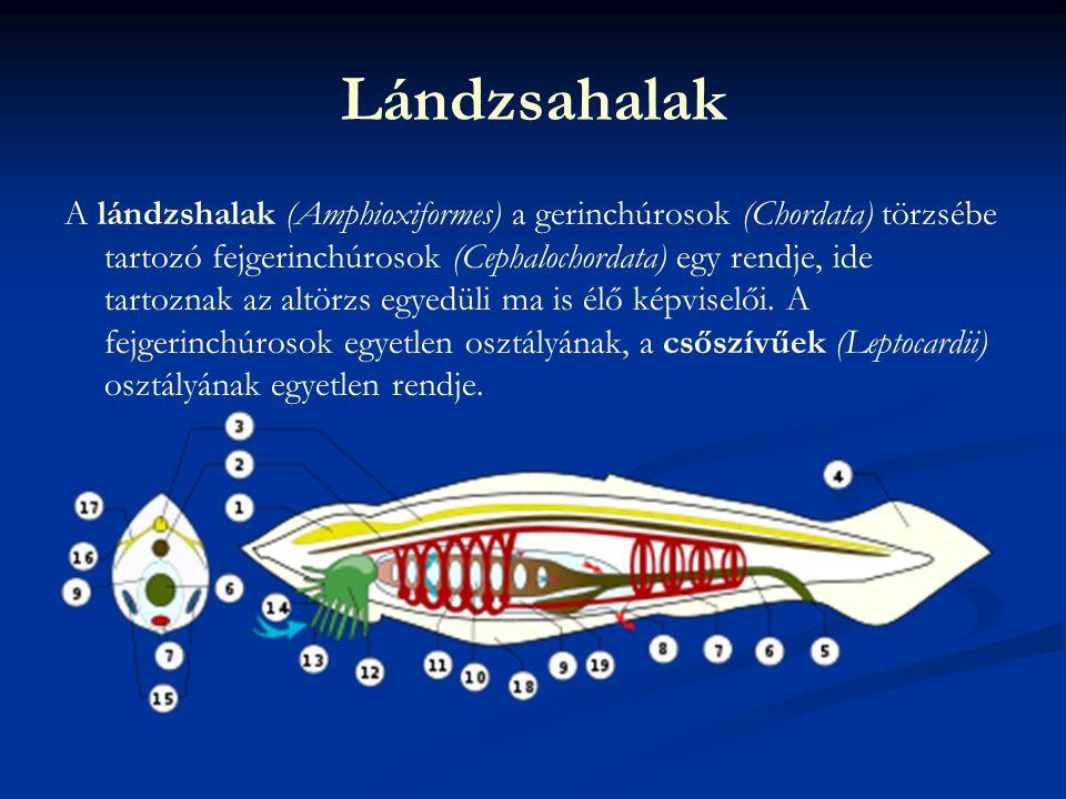 Lándzsahalak