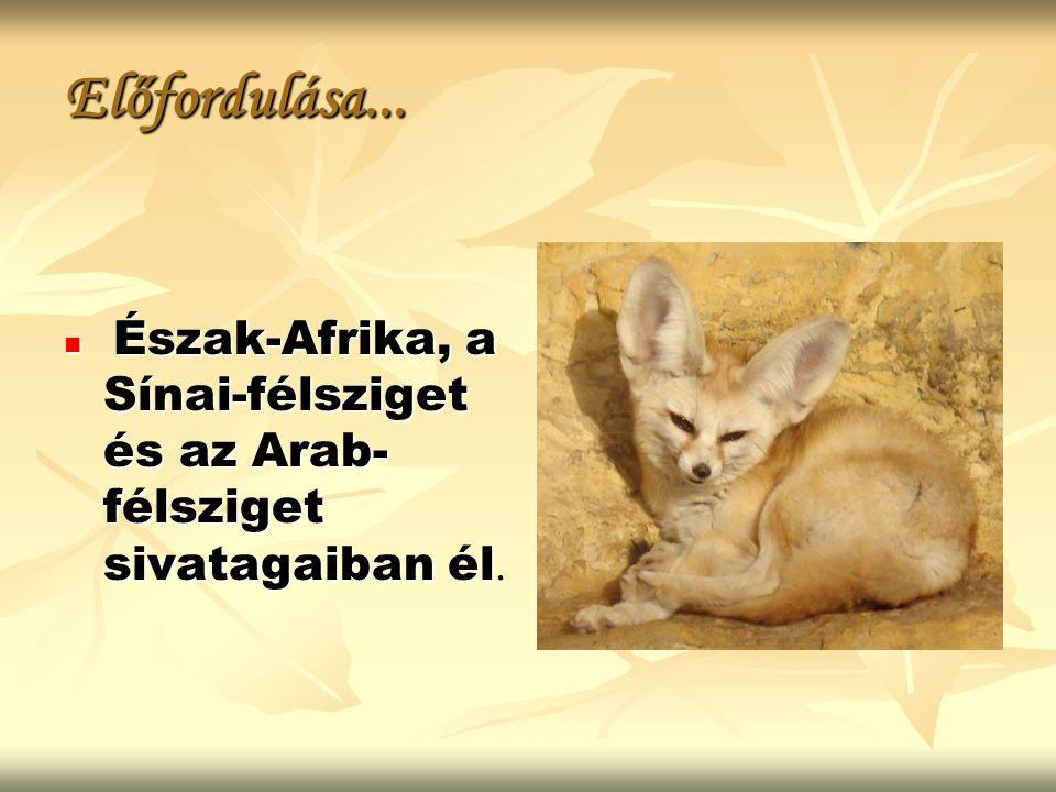 Előfordulása... Észak-Afrika, a Sínai-félsziget és az Arab-félsziget sivatagaiban él.