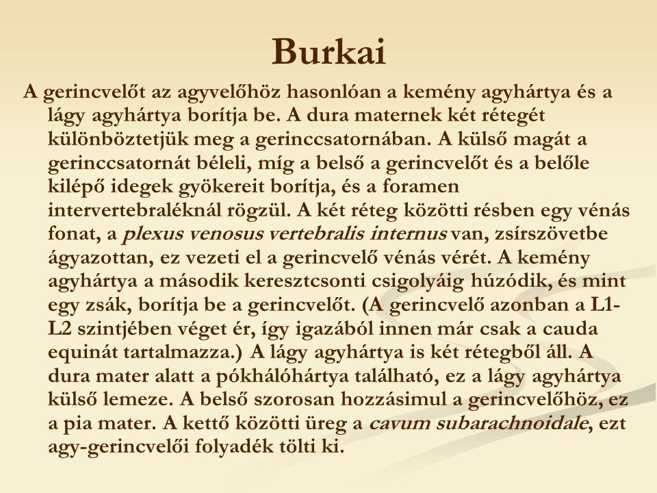 Burkai