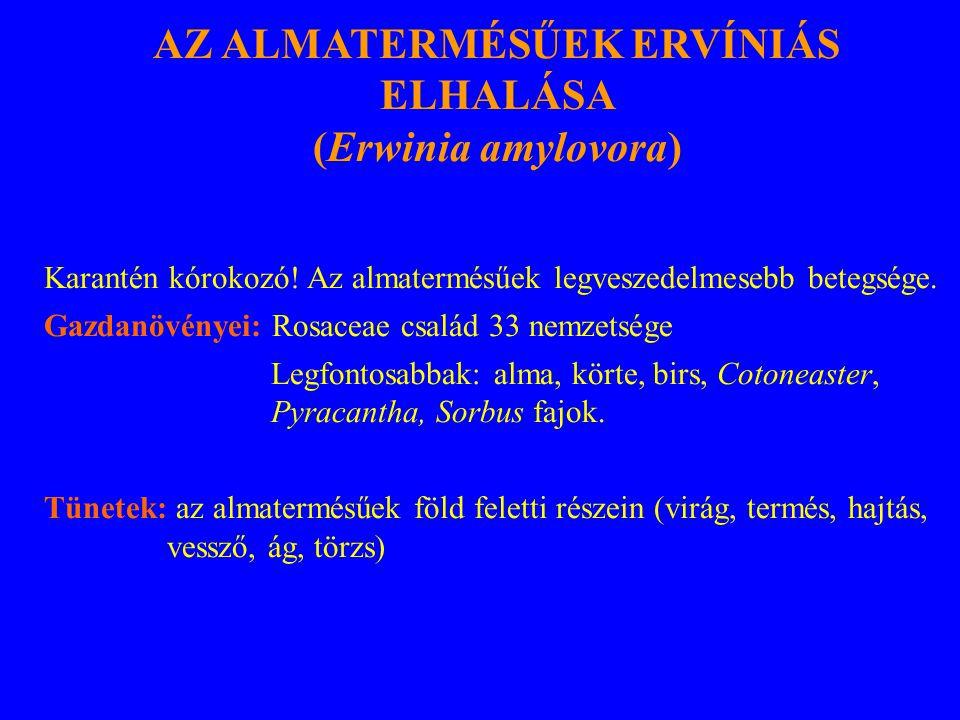 AZ ALMATERMÉSŰEK ERVÍNIÁS ELHALÁSA