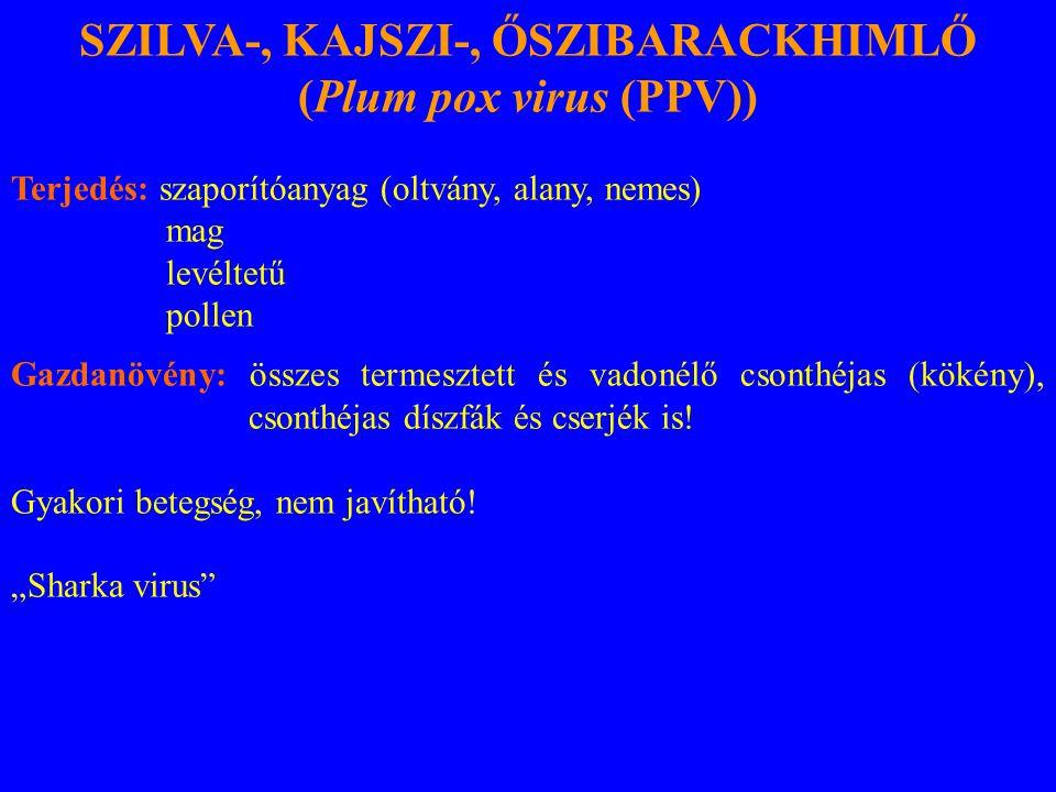 SZILVA-, KAJSZI-, ŐSZIBARACKHIMLŐ