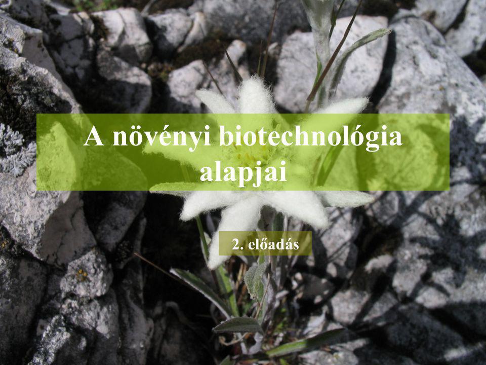 A növényi biotechnológia alapjai