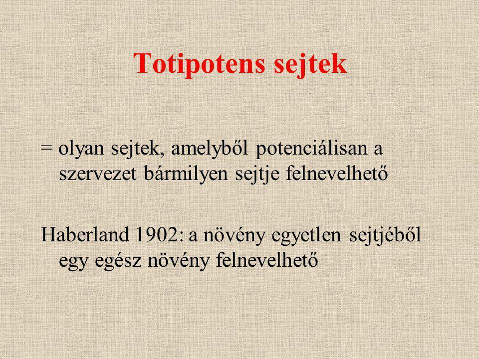 Totipotens sejtek = olyan sejtek, amelyből potenciálisan a szervezet bármilyen sejtje felnevelhető.