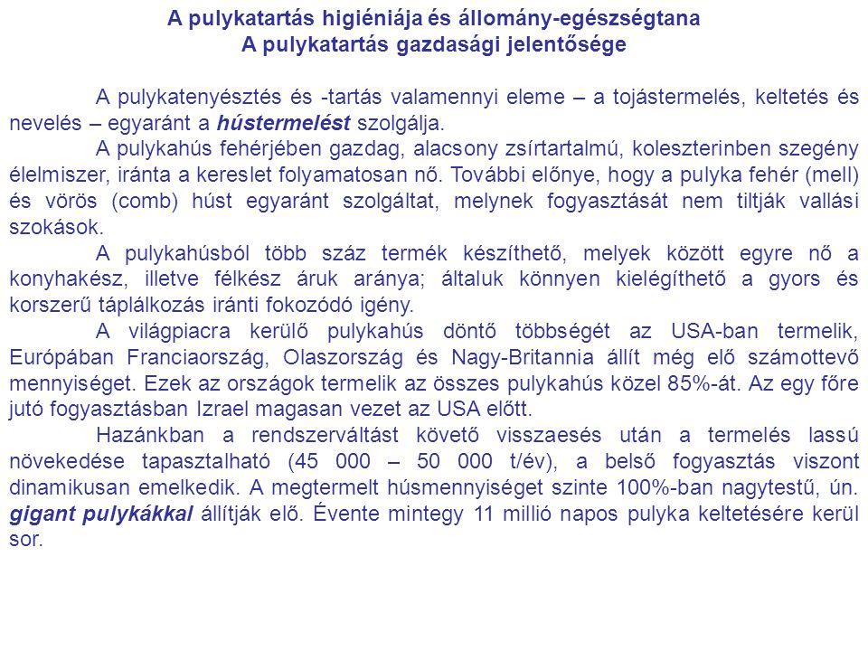 A pulykatartás higiéniája és állomány-egészségtana