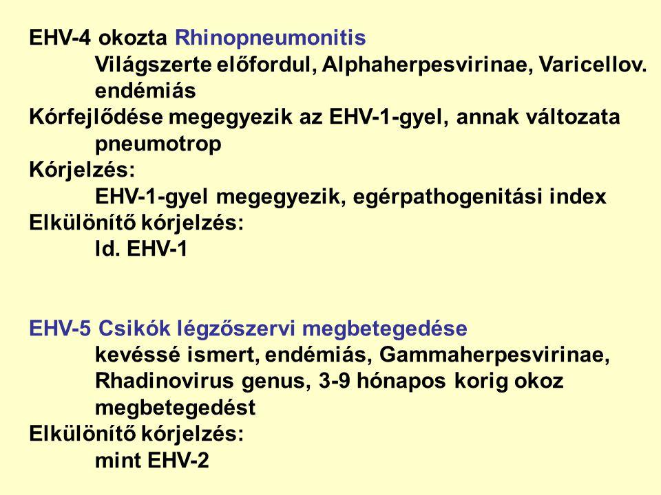 EHV-4 okozta Rhinopneumonitis
