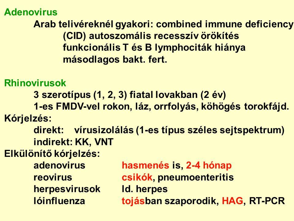Adenovirus Arab telivéreknél gyakori: combined immune deficiency. (CID) autoszomális recesszív örökítés.
