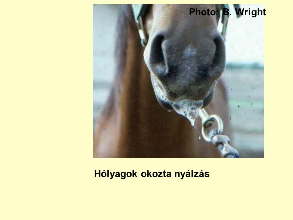 Photo: B. Wright Hólyagok okozta nyálzás