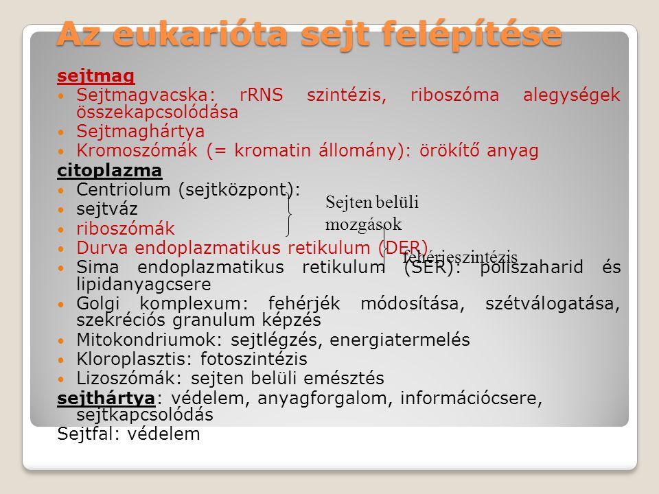 Az eukarióta sejt felépítése