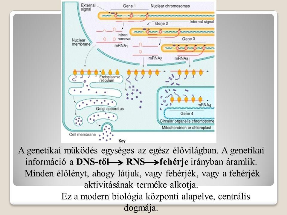 Ez a modern biológia központi alapelve, centrális dogmája.
