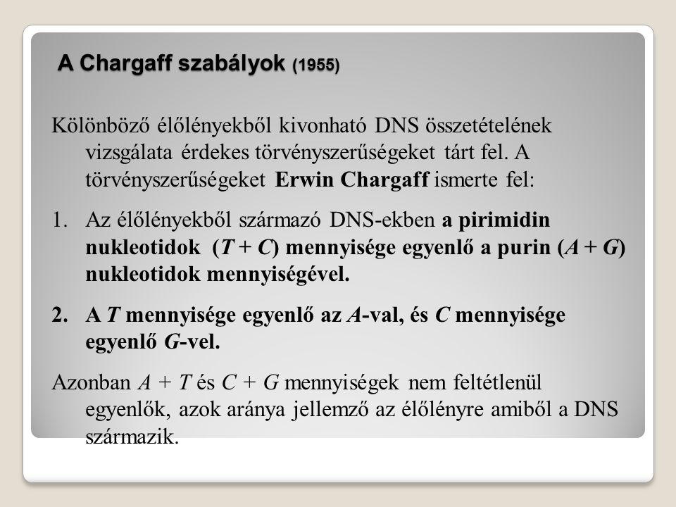 A Chargaff szabályok (1955)