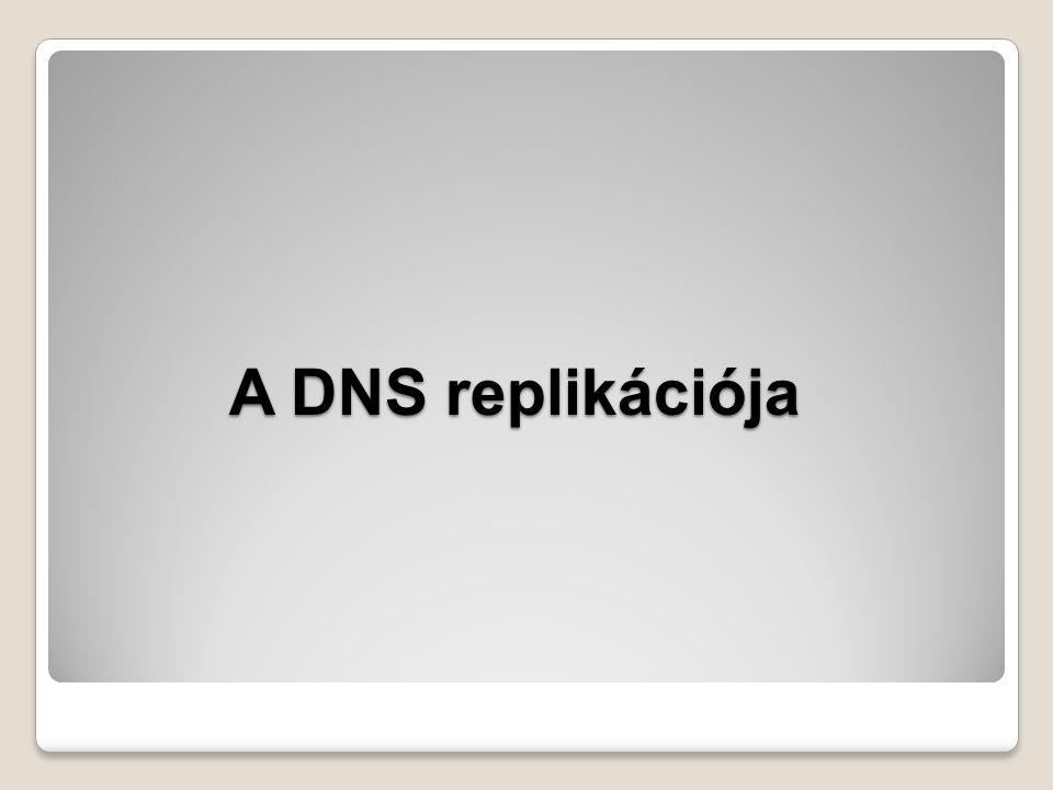 A DNS replikációja