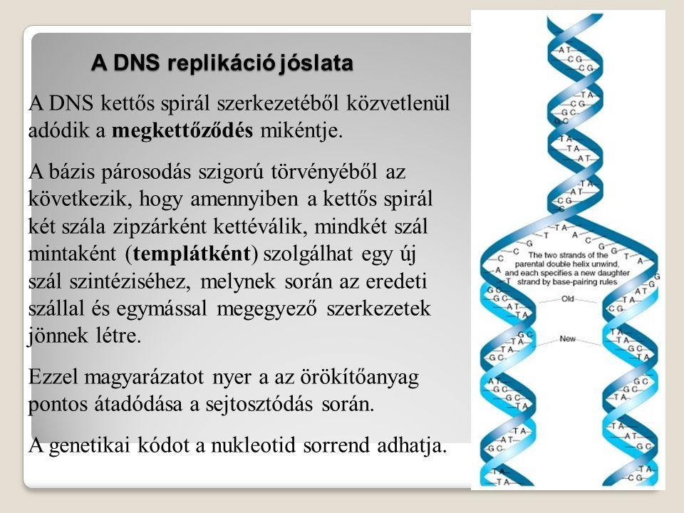 A DNS replikáció jóslata