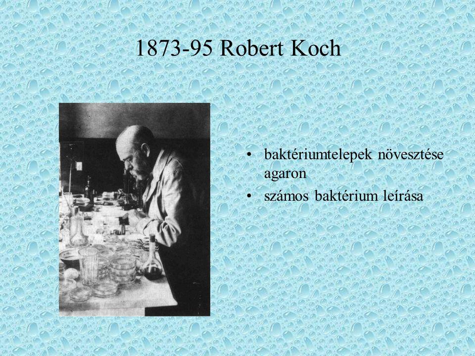1873-95 Robert Koch baktériumtelepek növesztése agaron