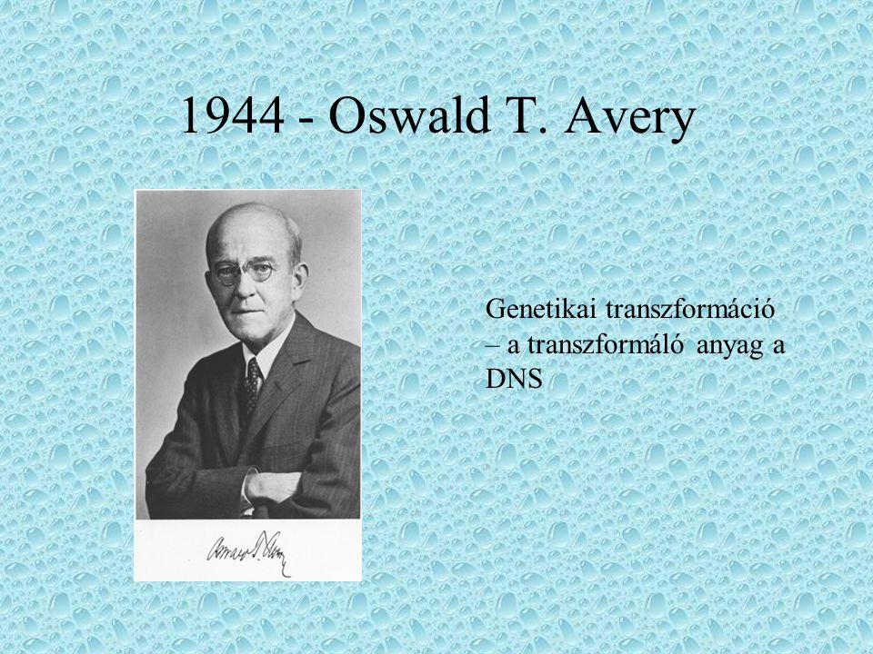 1944 - Oswald T. Avery Genetikai transzformáció – a transzformáló anyag a DNS