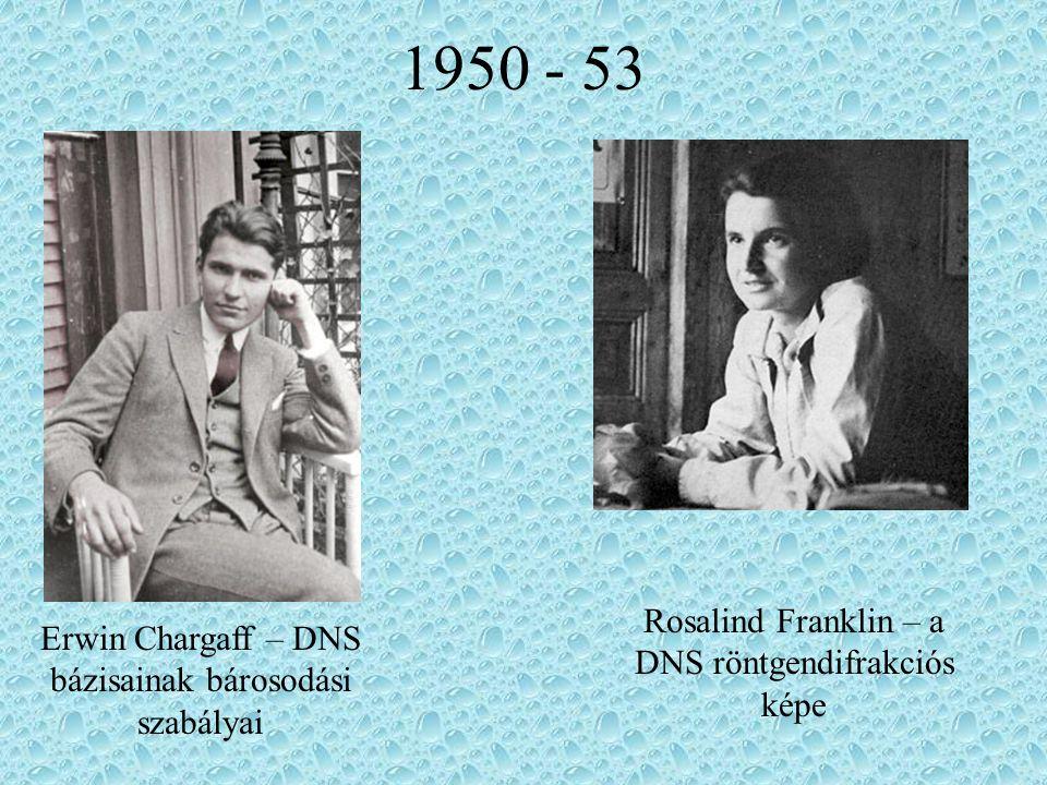 1950 - 53 Rosalind Franklin – a DNS röntgendifrakciós képe