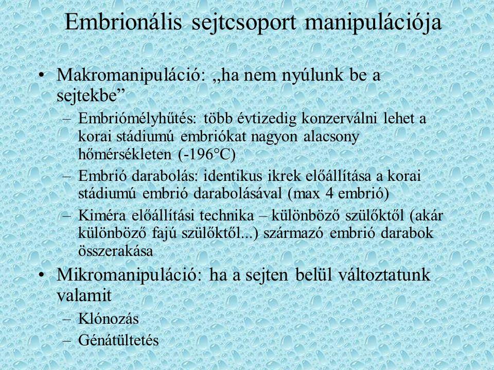 Embrionális sejtcsoport manipulációja