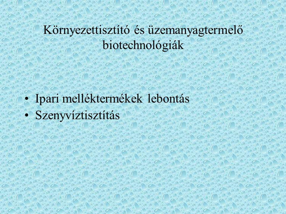 Környezettisztító és üzemanyagtermelő biotechnológiák