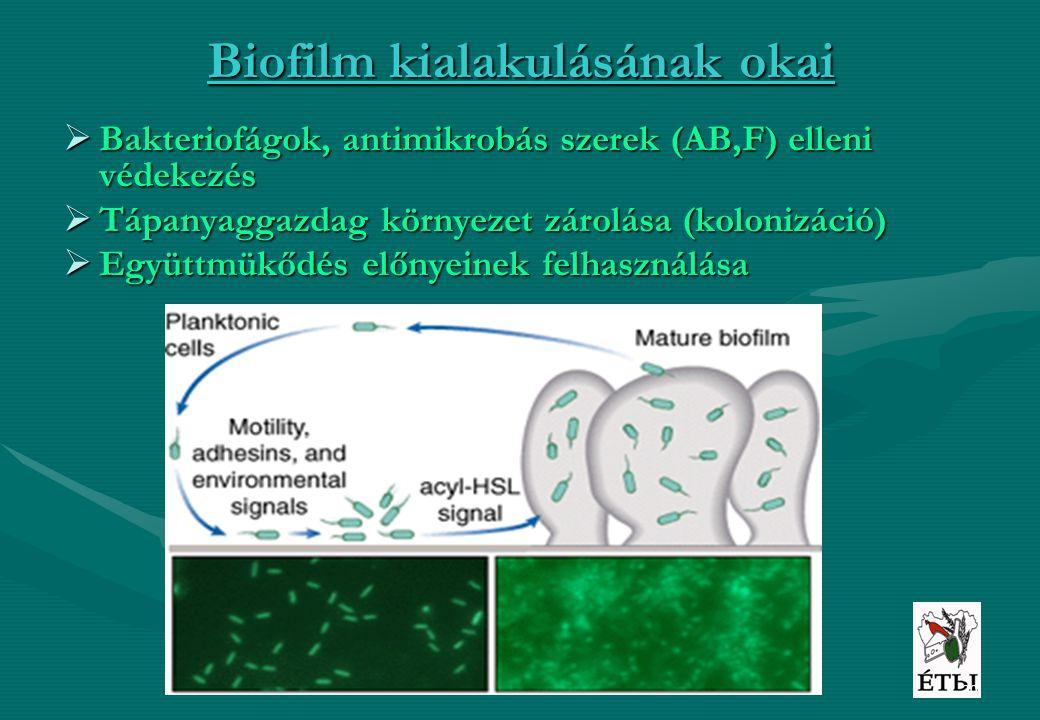 Biofilm kialakulásának okai